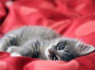 猫咪绝育后会发生哪些问题?