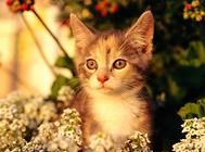 猫咪繁殖注意事项