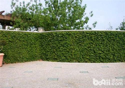 绿篱立面图马克笔手绘