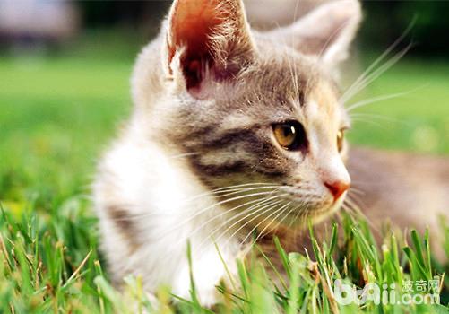 貓咪對你信任的表現有哪些