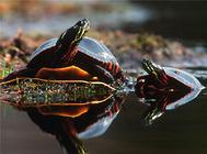 水龟需要的水质等级标准