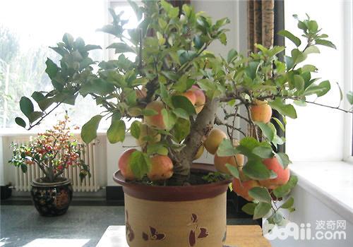冬季果树的回缩修剪方法