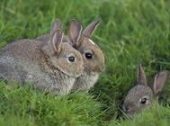 肉兔对各营养有何需求