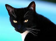 猫咪的绝症——猫传染性腹膜炎
