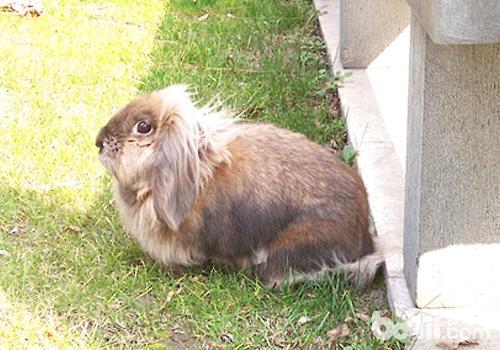 不同阶段的兔子对温度有何要求-轻博客