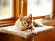 饲养猫咪十种错误你占哪几项?