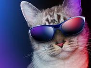 用特殊检查诊断猫咪的呼吸系统疾病