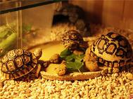 饲养陆龟前需要准备好哪些必备用品?