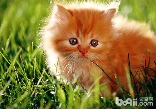 猫咪健康关乎社会公共卫生