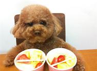 【美食攻略】自制适合老年犬吃的营养餐