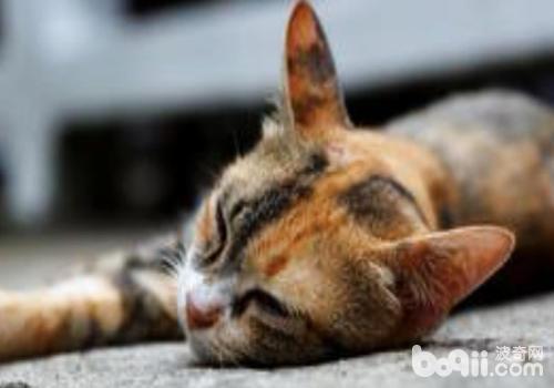 猫也十分容易得病的
