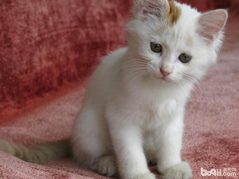 母貓的產后護理