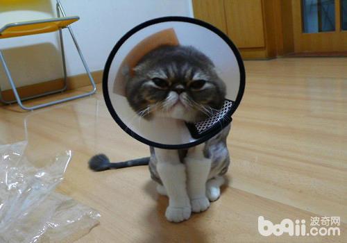 猫咪的项圈