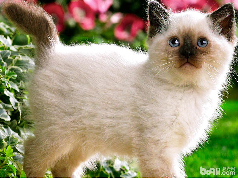 幾種常見的貓咪的保定方法
