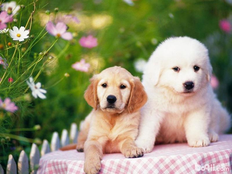 酶與益生菌對于狗狗有何作用