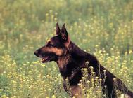 狗狗可以分为哪些类型