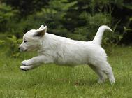 狗狗排尿有哪些异常状态