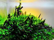 绿水养鱼的作用