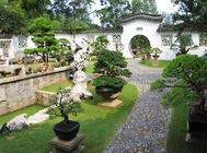 庭院栽种绿篱的作用及绿篱的挑选要点