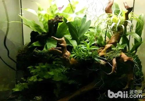 苔藓缸的制作步骤