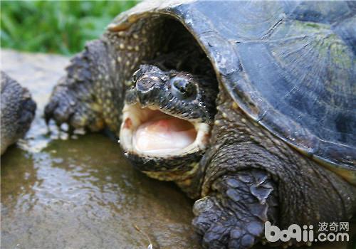 适合小乌龟吃的动物性饲料有哪些?