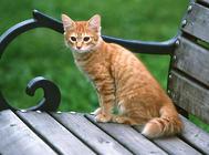 给家里猫咪耳道的检查以及清理方法