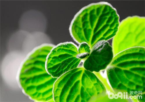 十种常见的带有香味的多肉植物