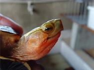 【DIY】实用的水龟喂食台