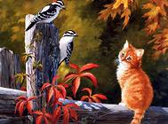 猫咪的代谢性酸中毒及病例分析
