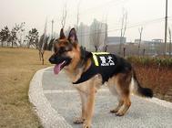 应激对警犬训练的影响