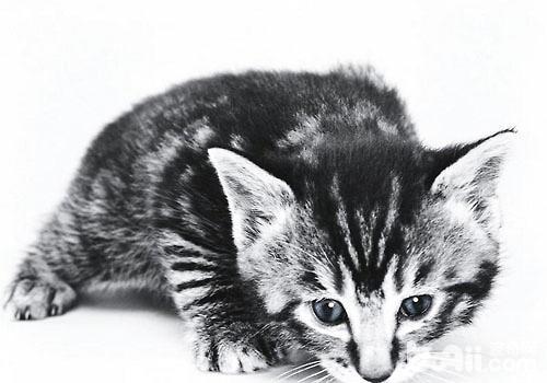 猫低钾血症的诊断与治疗