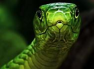 养蛇的常用消毒液