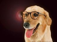 狗狗的保定方法有哪些