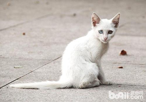 流浪猫——鸟儿的头号杀手