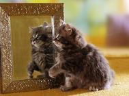 猫咪的疱疹病毒及其引起的口炎