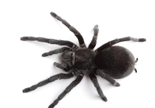 蜘蛛最好还是单独饲养