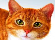 日常生活中如何防止猫受伤