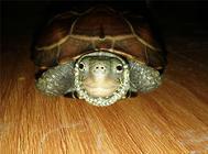 如何挑选优质的龟鳖饲料