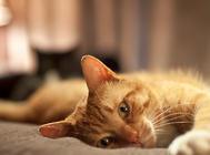 如何发现猫咪的异常状况?