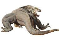 科莫多巨蜥的毒性强吗