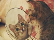 怎样了解猫的内心状态
