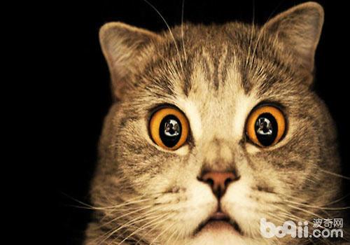 猫咪具有丰富生动的肢体语言