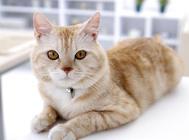 猫为什么爱吃老鼠
