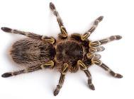 饲养蜘蛛要注意哪些问题