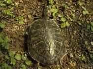 乌龟如何顺利度过夏天