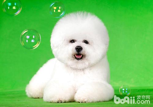 如果无法确定狗狗是否温顺,就不要轻易与陌生狗狗接触
