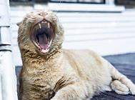 如何让猫咪在洗澡时安静下来