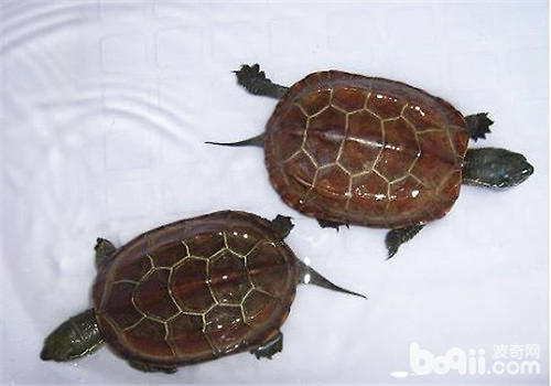 饲养乌龟的各种小知识