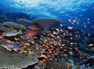 鱼缸的虹吸换水法