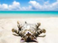 猫咪耳部疾病的预防